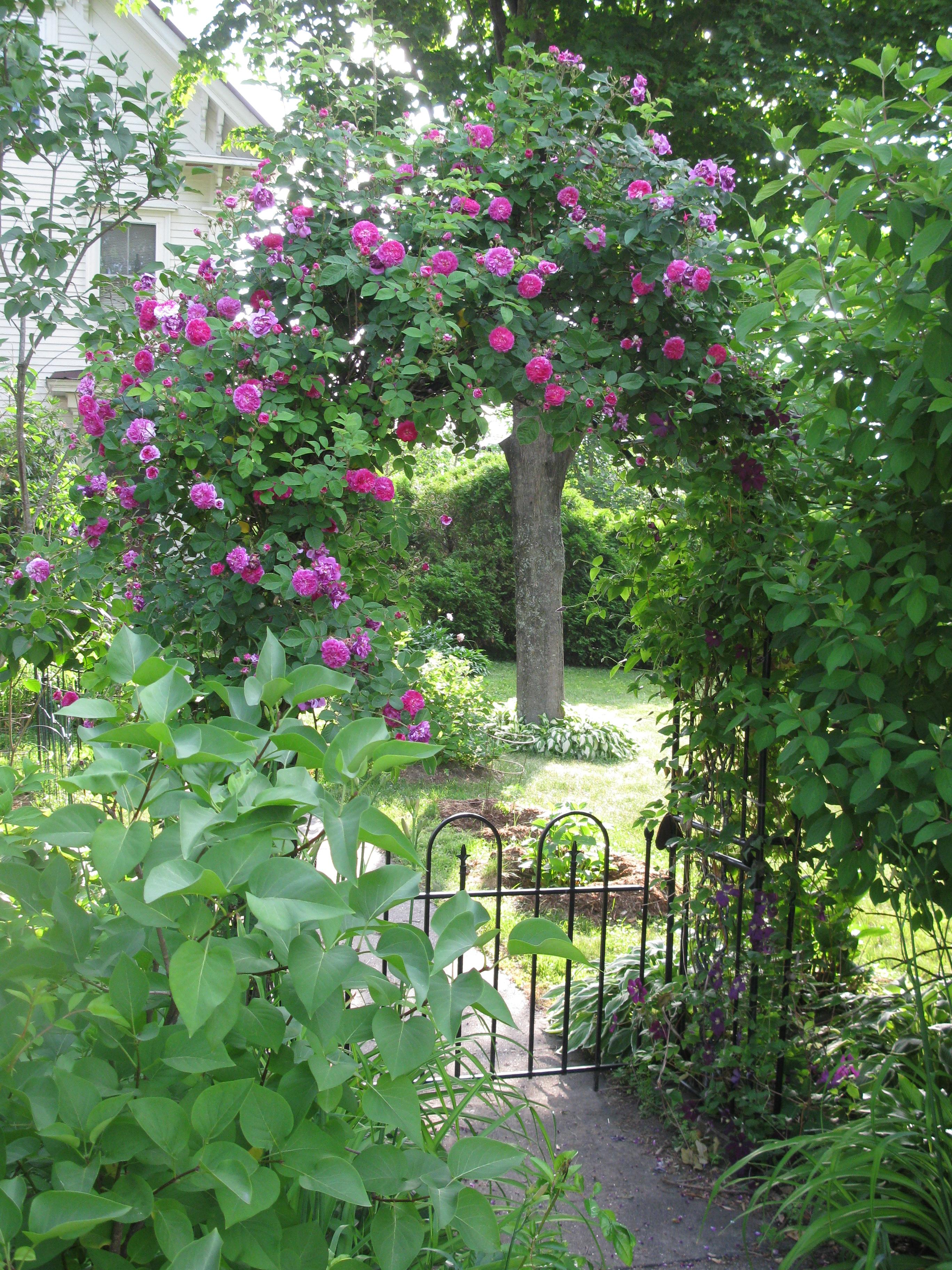2014 New England Summer Garden Update