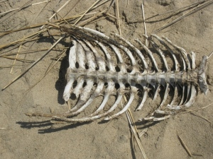 Skeleton Near Dunes & Pond (3)